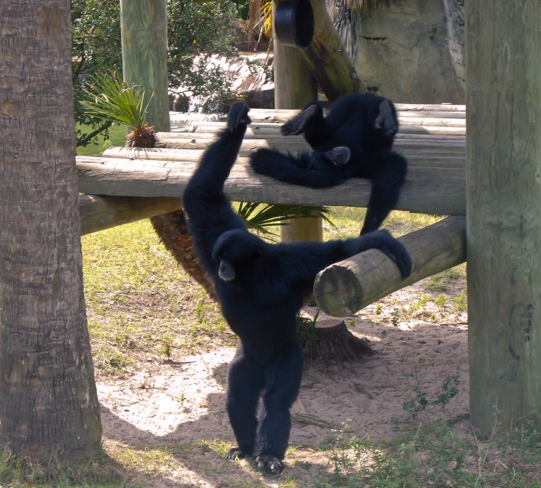 Just monkeying around...