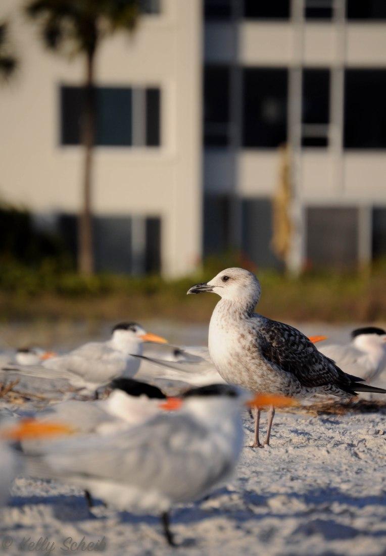 birdoutlander-11